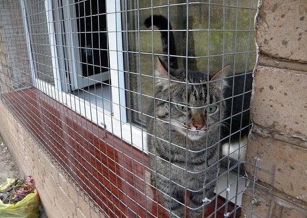 Сетка на окно для кошек своими руками 100